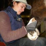 Your horse's hooves deserve a good bit of attention. HOVAKUTEN Angela Savoia